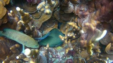 Snorkeling in Koh Lipe