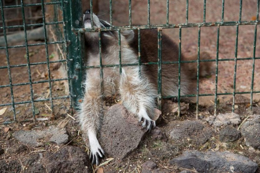 Leidene Tiere - Oasis Park