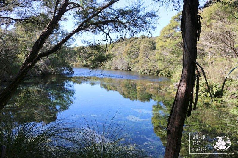 Waikoropupu Springs, Golden Bay, NZ, World Trip Diaries