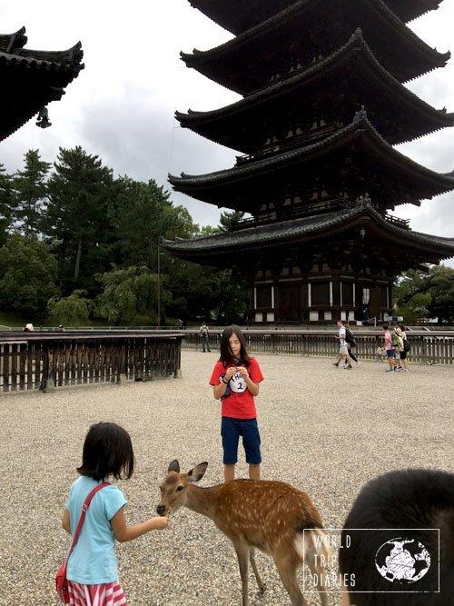 feeding Nara deer