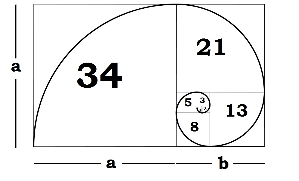 Understanding The Fibonacci Sequence & Golden Ratio