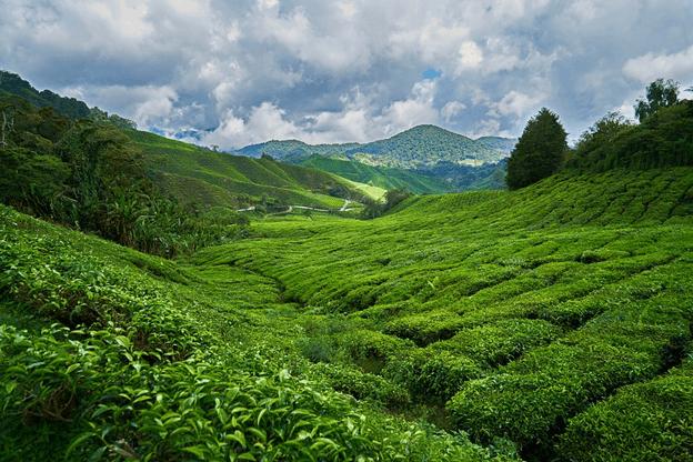 beauty of nature in Lepchajagat near Darjeeling
