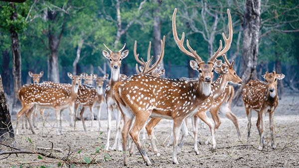 SUndderban National Park the best place to travel in West Bengal