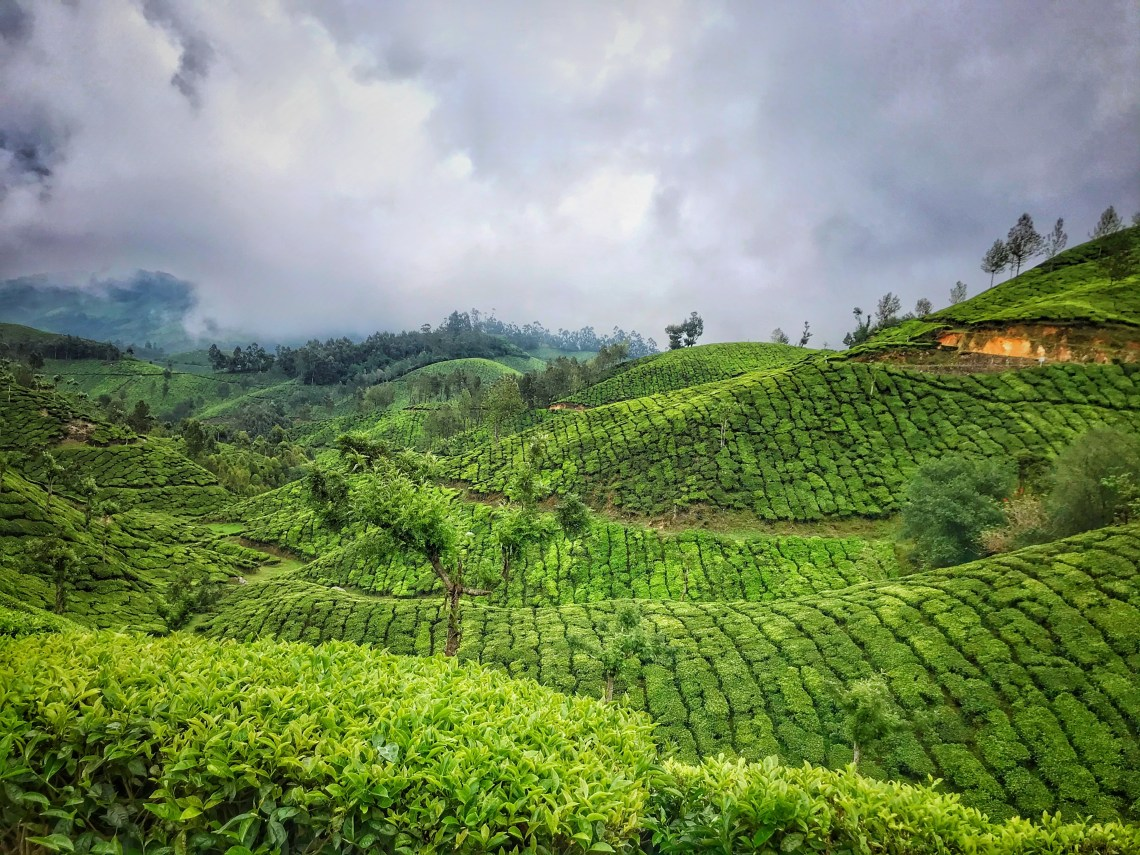 2 Days Itinerary Travel Guide to Munnar 1