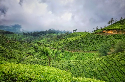 2 Days Itinerary Travel Guide to Munnar 4