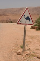 Watch out for Camels!