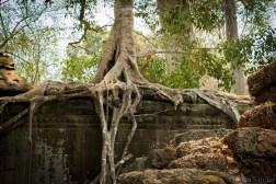 Cambodia_Angkor_2016_Worldviber_25