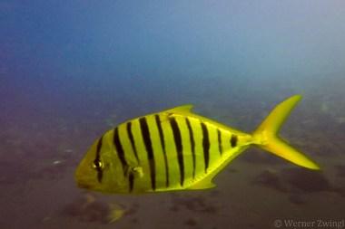 Bali_diving_2016_17