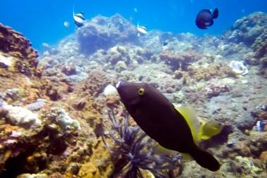 Bali_diving_2016_18