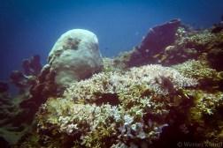 Bali_diving_2016_22