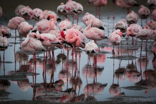 Flamingos in central Namibia