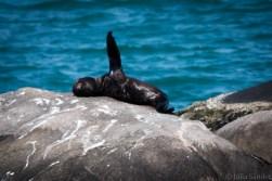 Seal on the beach