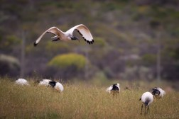 south-africa-western-cape-2016-6