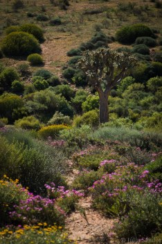 south-africa-western-cape-namaqualand-2016-37