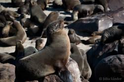 Seals in the sun