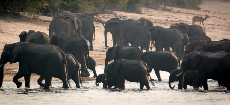Botswana – unspoiled wilderness in Africa