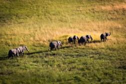 Botswana, Okavango delta elephants