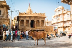 Cow peacefully standing on the Main square of Jaisalmer Fort