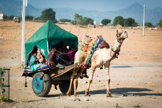 Camel carriage