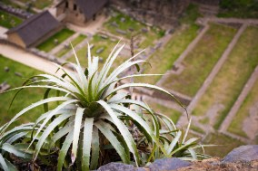 Tillandsia growing on the steep walls