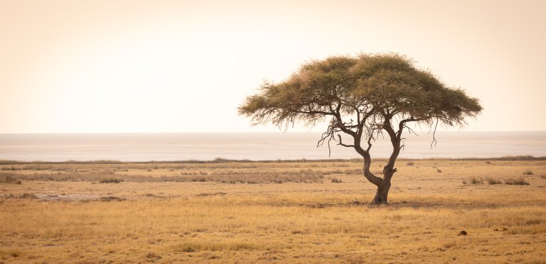 In the background the Etosha pan