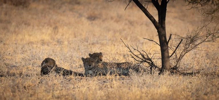 Central Kalahari – a Rough Piece of Nature