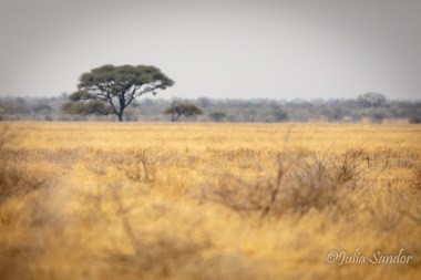 Afternoon sight of the savannah