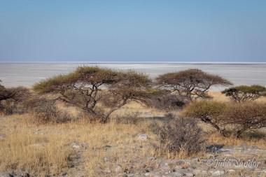 Typical vegetation on Kubu Island
