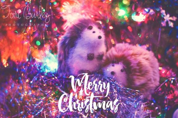 Hedgehogs Merry Christmas in Christmas Tree