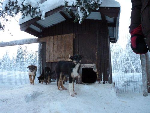 T-Puppies - Week 15 (1/4)