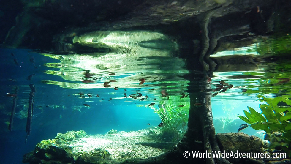 Grand Cenote Snorkelling with Stalactites and Turtles – Yucatan