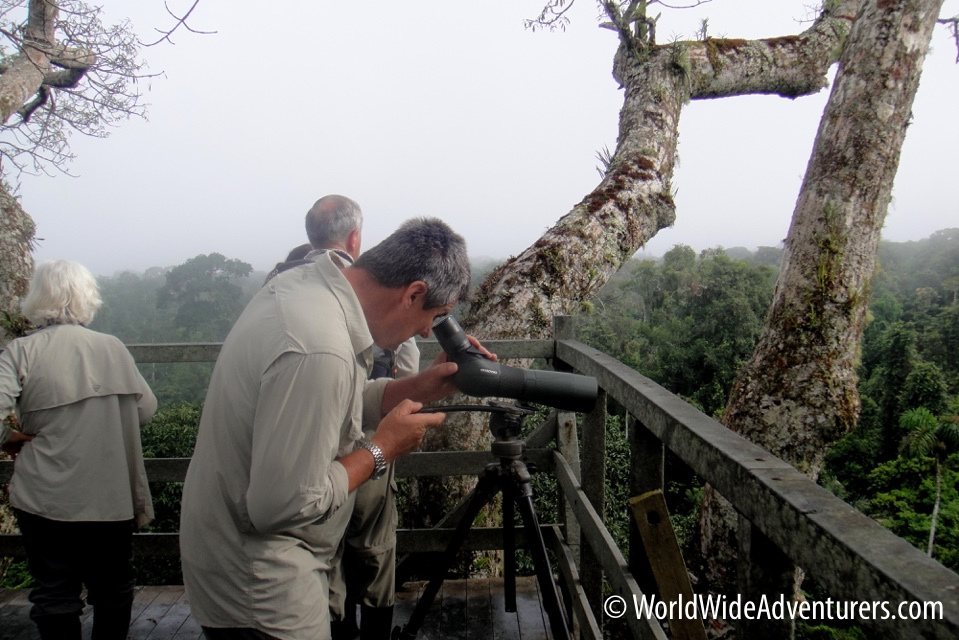 Amazon Napa Ecuador 14