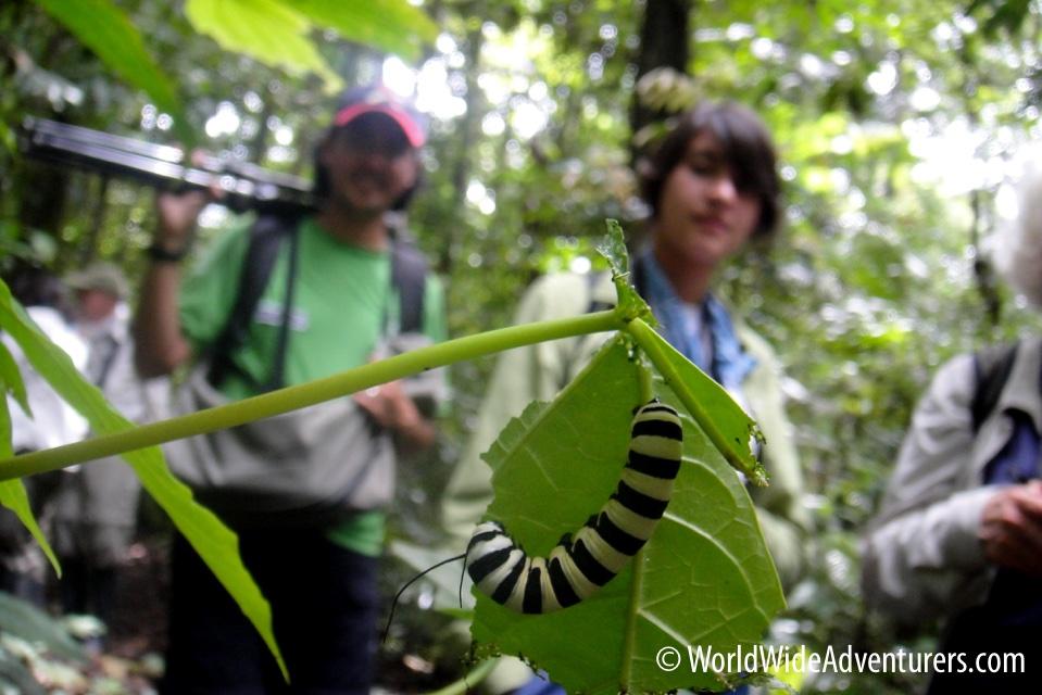 Amazon Napa Ecuador 15