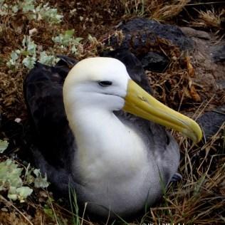 Galapagos Islands 10
