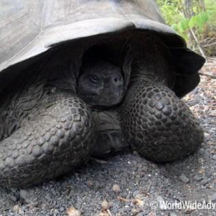 Galapagos Islands 29