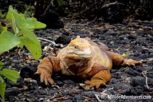 Galapagos Islands 30