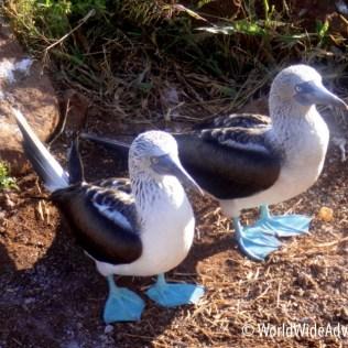 Galapagos Islands 34