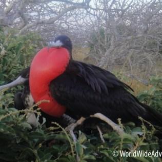 Galapagos Islands 37
