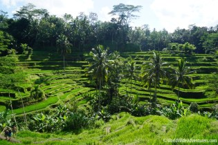 Living in Bali70