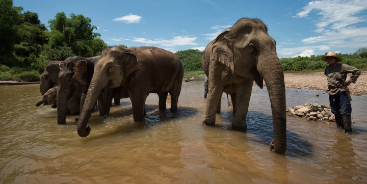 Elephant Sanctuary Laos