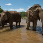 MandaLao Elephant Sanctuary Magical, Intimate Encounters