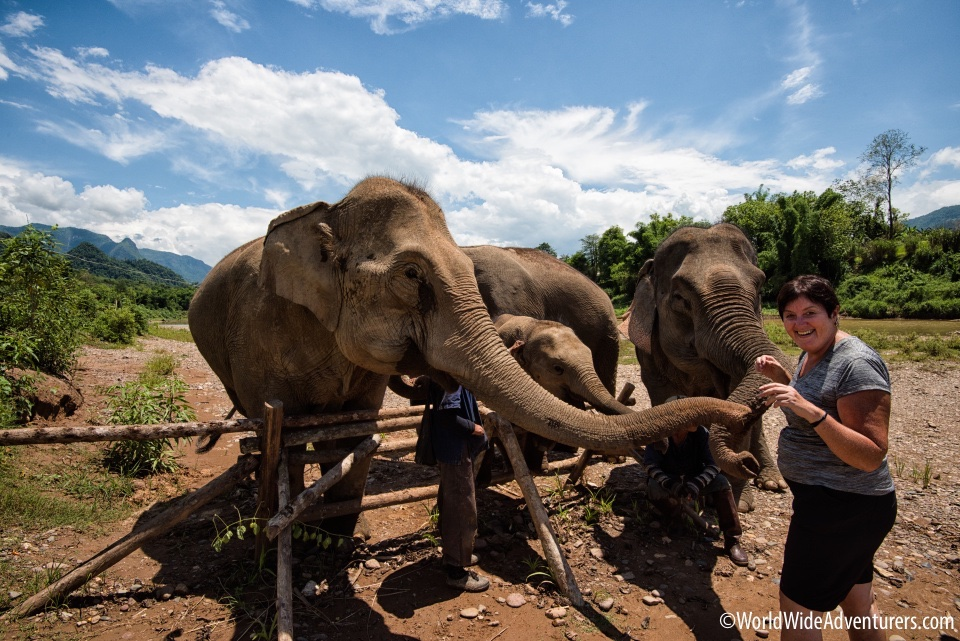 Elephant Sanctuary, Laos