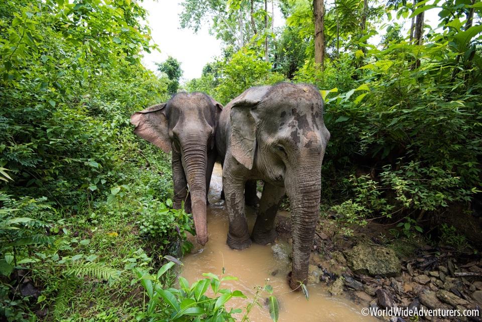 Elephant Sanctuary,Laos