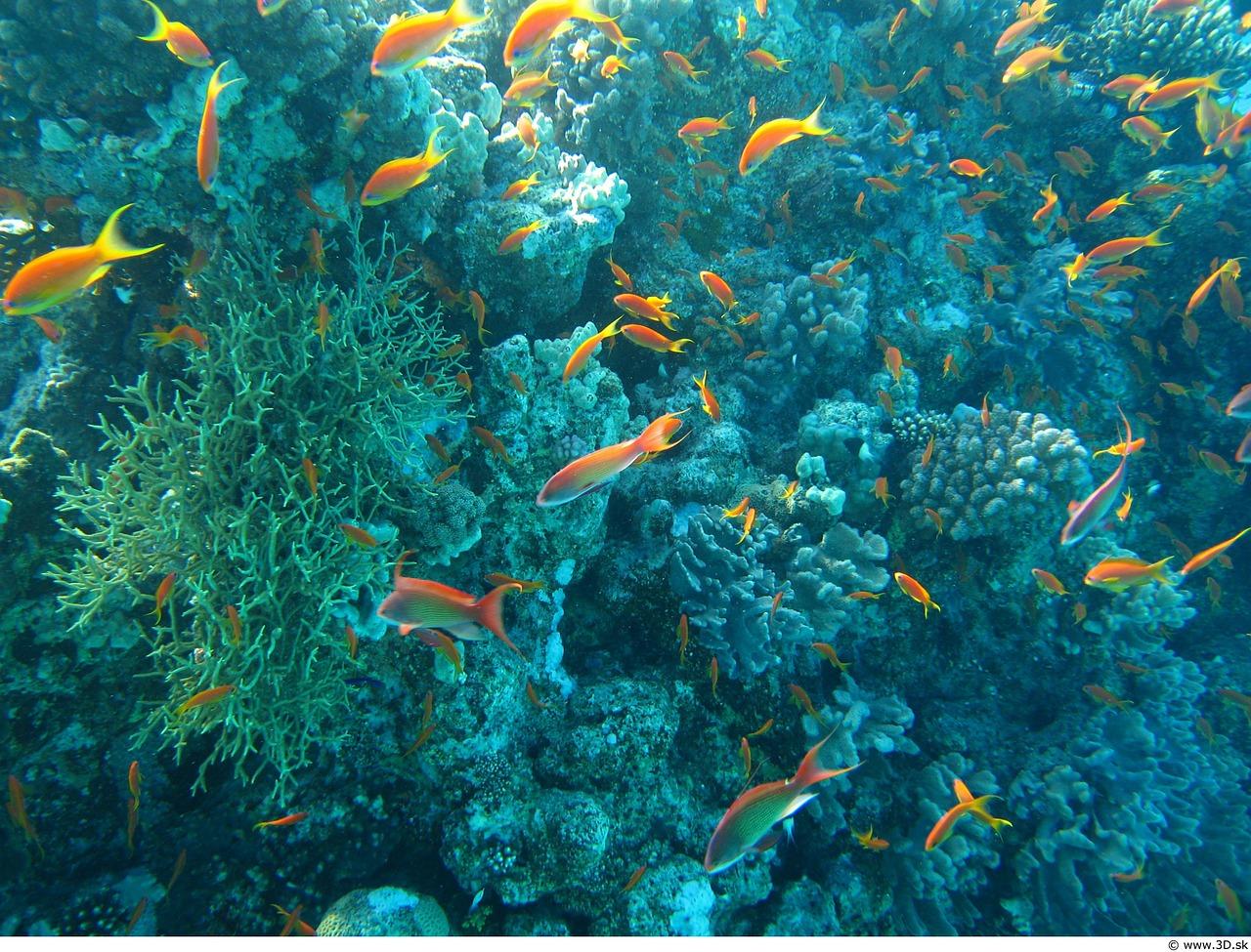 10 Amazing Sea Creatures Around The World
