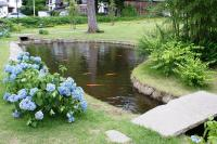 Backyard Fish Farming  Raise Fish In Your Home Pond ...
