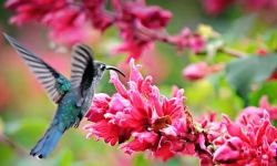 panama birding