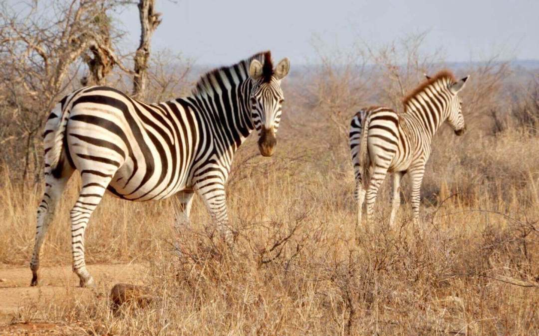 10 Reasons to go on a Safari Honeymoon