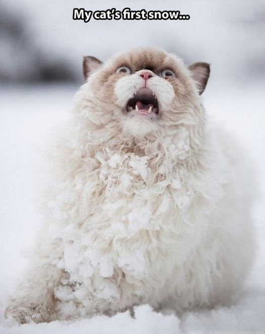 Funny Freezing Cold Images