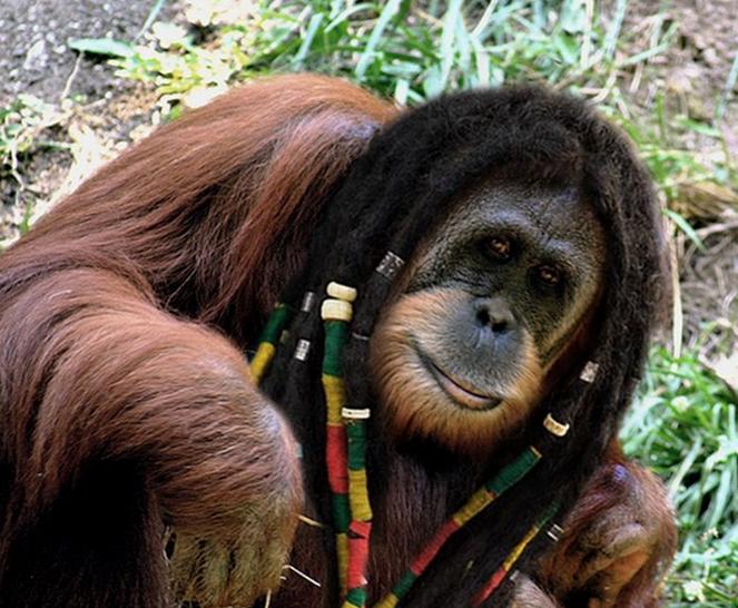 Animals With Human Hair 20 PHOTOS