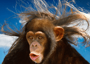animals with human hair 20